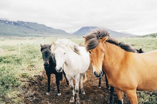 Free stock photo of farm, animals, horses
