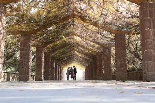Foto profissional grátis de árvore caída, caminho, juntos