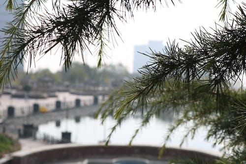Foto profissional grátis de árvore, lago, pinheiro