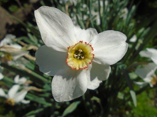 bahar, beyaz, çiçek, fulya içeren Ücretsiz stok fotoğraf