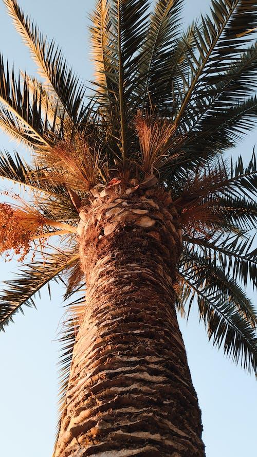 Fotobanka sbezplatnými fotkami na tému dlaň, farby, leto, palmový list