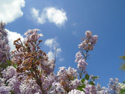 bahar, beyaz, bulutlar, Çiçekler içeren Ücretsiz stok fotoğraf