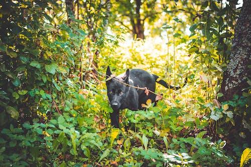 Бесплатное стоковое фото с дневной свет, животное, зеленый, карие глаза