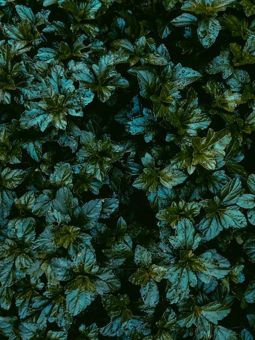 คลังภาพถ่ายฟรี ของ กลางแจ้ง, การเจริญเติบโต, ต้นไม้, ธรรมชาติ