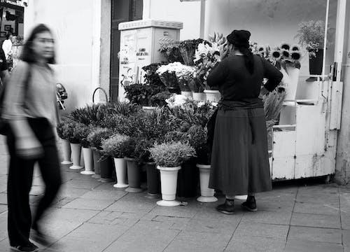 Free stock photo of florist, flower, gypsy