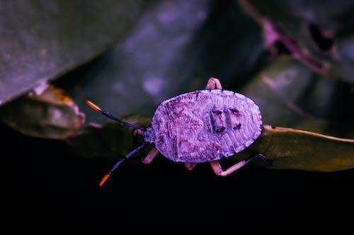shieldbug, 動物, 宏觀, 小蟲 的 免费素材照片