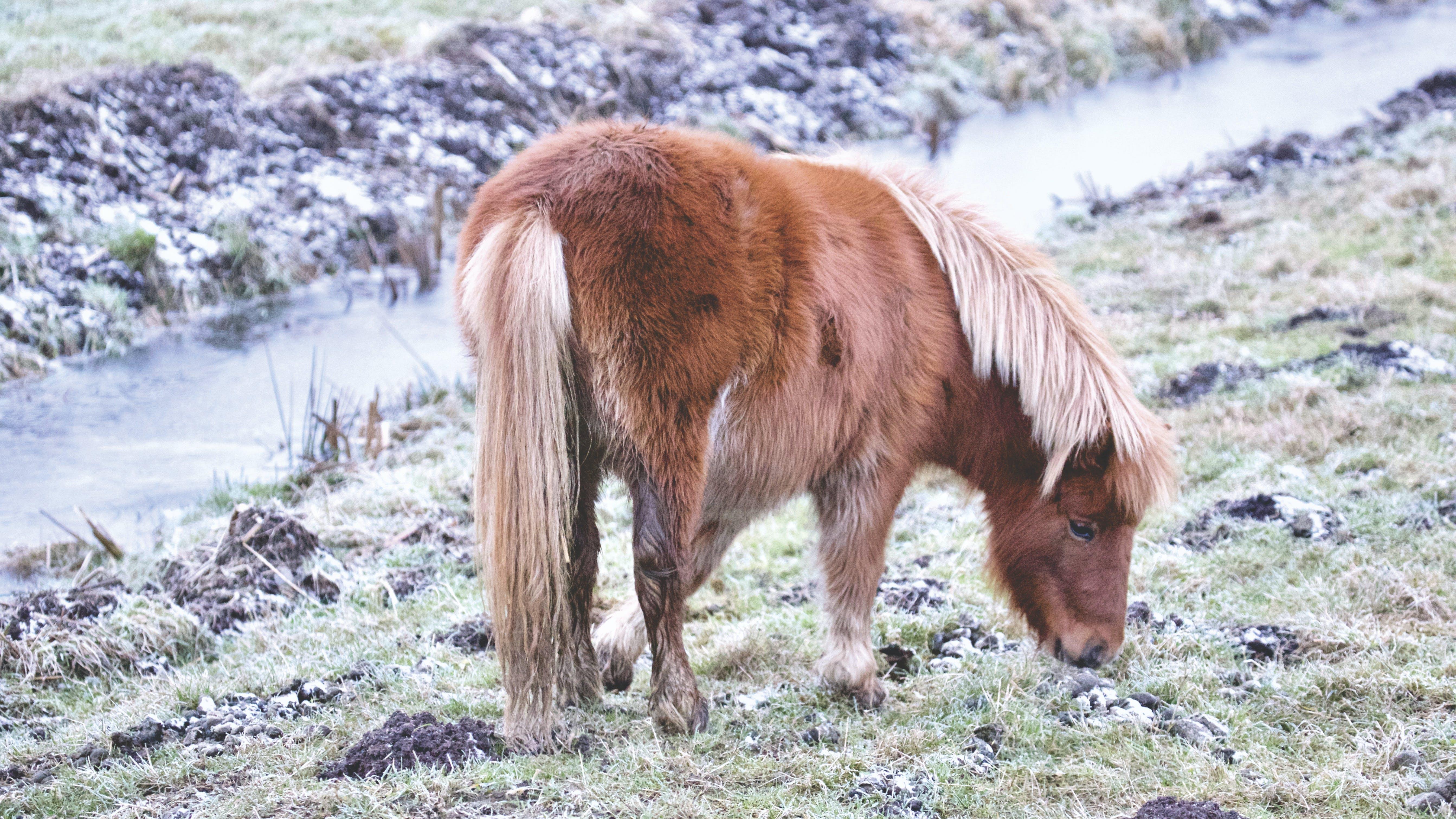 Ingyenes stockfotó állat, állatállomány, állatok, állattenyésztés témában
