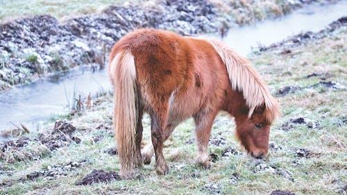 乾草地, 乾草田, 動物, 動物養殖 的 免費圖庫相片