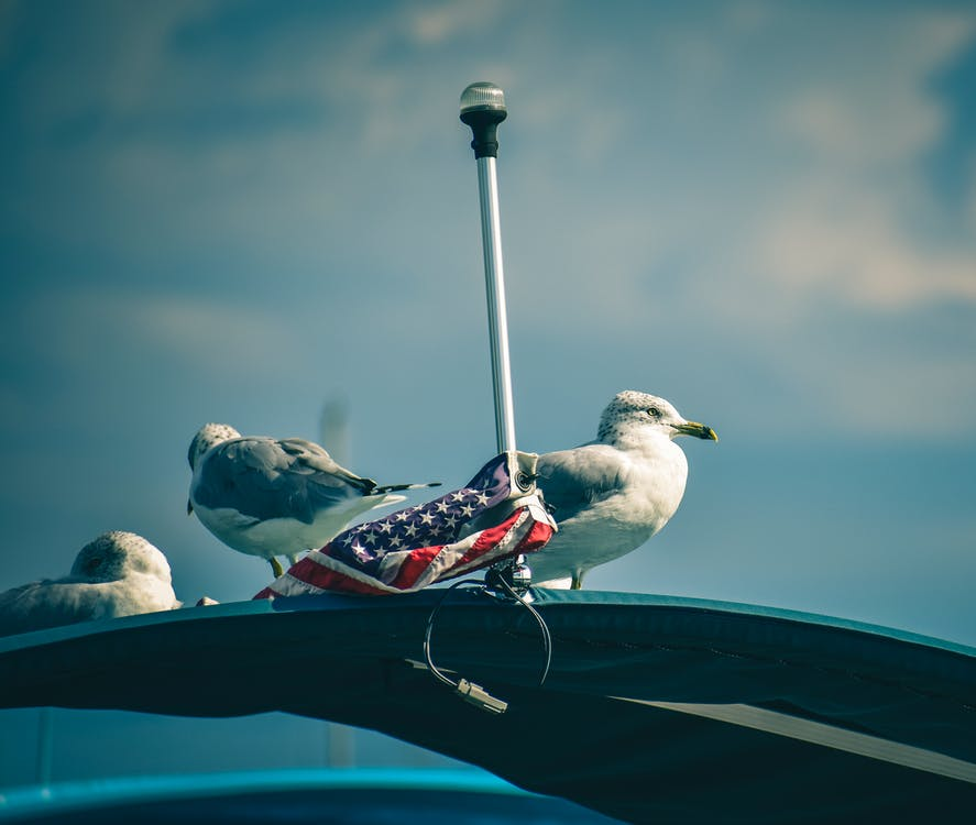 Three Seagulls and American Flag