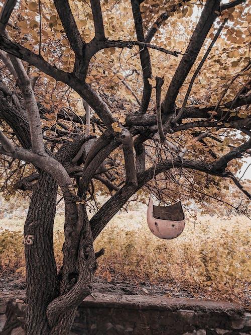 Foto profissional grátis de árvore nua, capacete, passarinhos