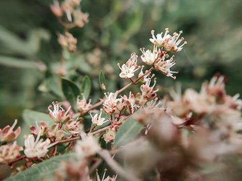Gratis arkivbilde med makro, makrofotografering, vakre blomster