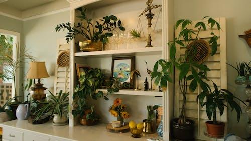 原本, 室內, 室內植物, 室內設計 的 免費圖庫相片