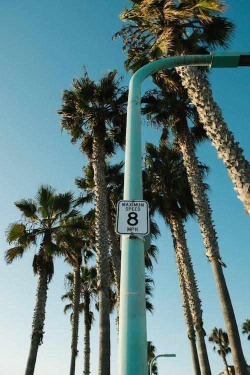 ağaçlar, dar açılı çekim, en uzun, gökyüzü içeren Ücretsiz stok fotoğraf
