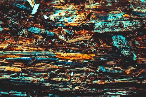 Foto stok gratis alam, hutan, kayu, makro