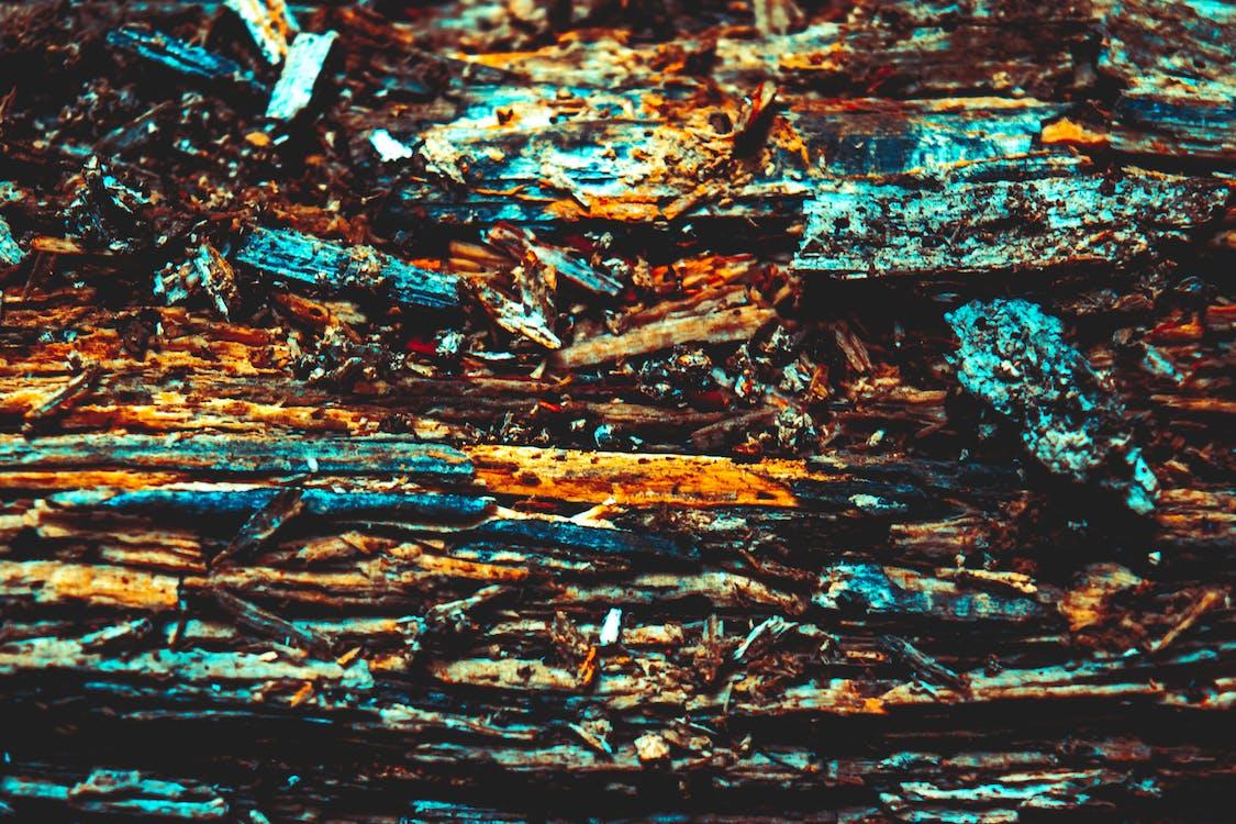 floresta, macro, madeira