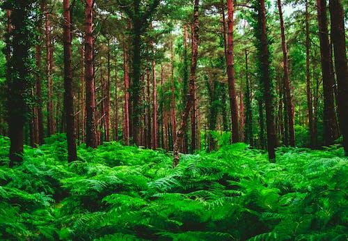 Photos gratuites de arbres, beau paysage, bois, branches d'arbre