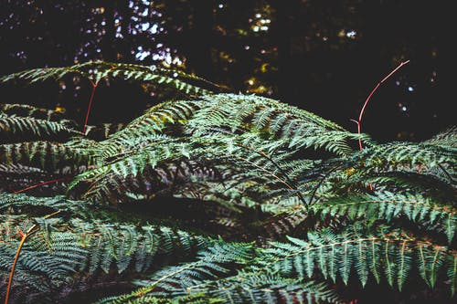 Free stock photo of ferns, forest, nature