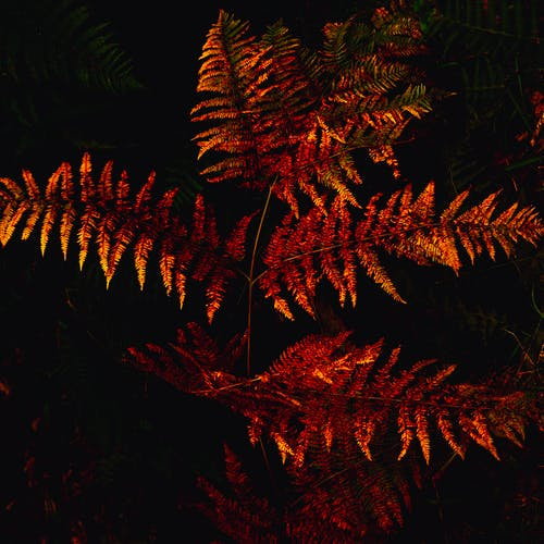 Free stock photo of fern, forest, nature, orange