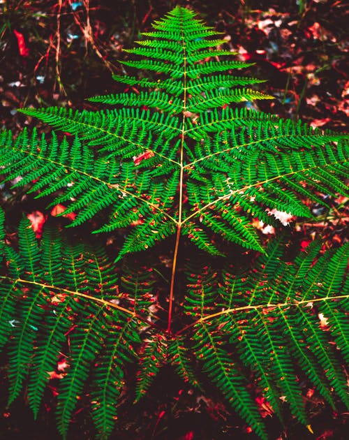 Free stock photo of fern leaf, forest, nature