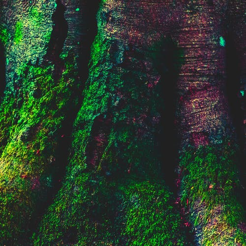 Free stock photo of edited, green, moss, nature