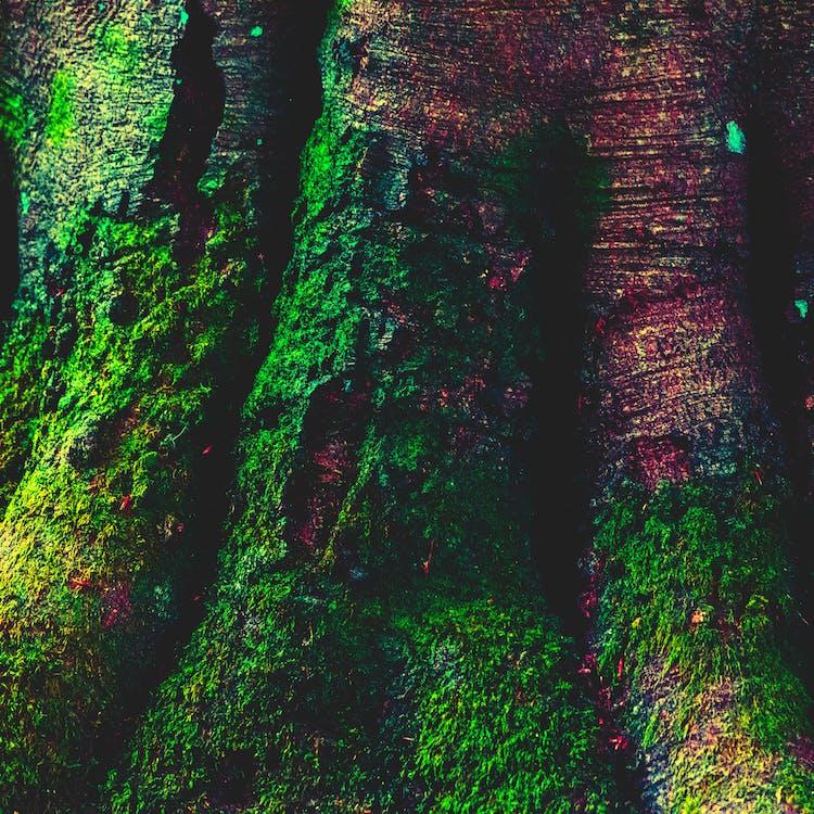 Free stock photo of edited, green, moss