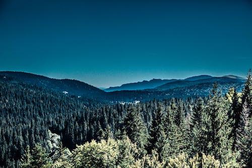 คลังภาพถ่ายฟรี ของ จุดสูงสุด, ต้นไม้, ธรรมชาติ, ภูมิทัศน์