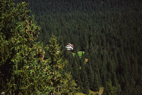 House in the Middle of Trees