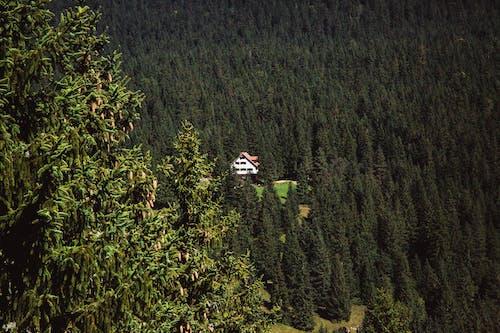 Fotobanka sbezplatnými fotkami na tému borovice, denné svetlo, divá príroda, dom