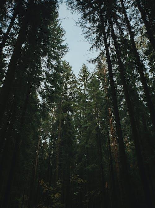Ảnh lưu trữ miễn phí về ánh sáng ban ngày, bình minh, cao nhất, cây