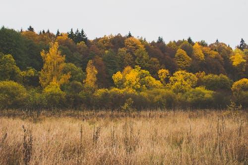 고요한, 광야, 나무, 목가적인의 무료 스톡 사진