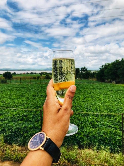 Gratis stockfoto met bubbels, druivenstok, reiziger, wijn proeven