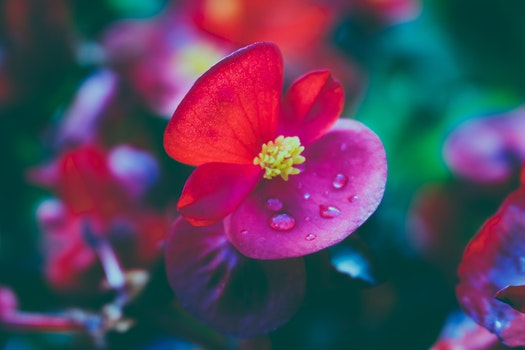 Free stock photo of nature, flowers, petals, plant