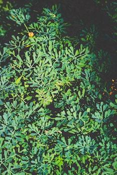 Free stock photo of nature, pattern, bush, plant