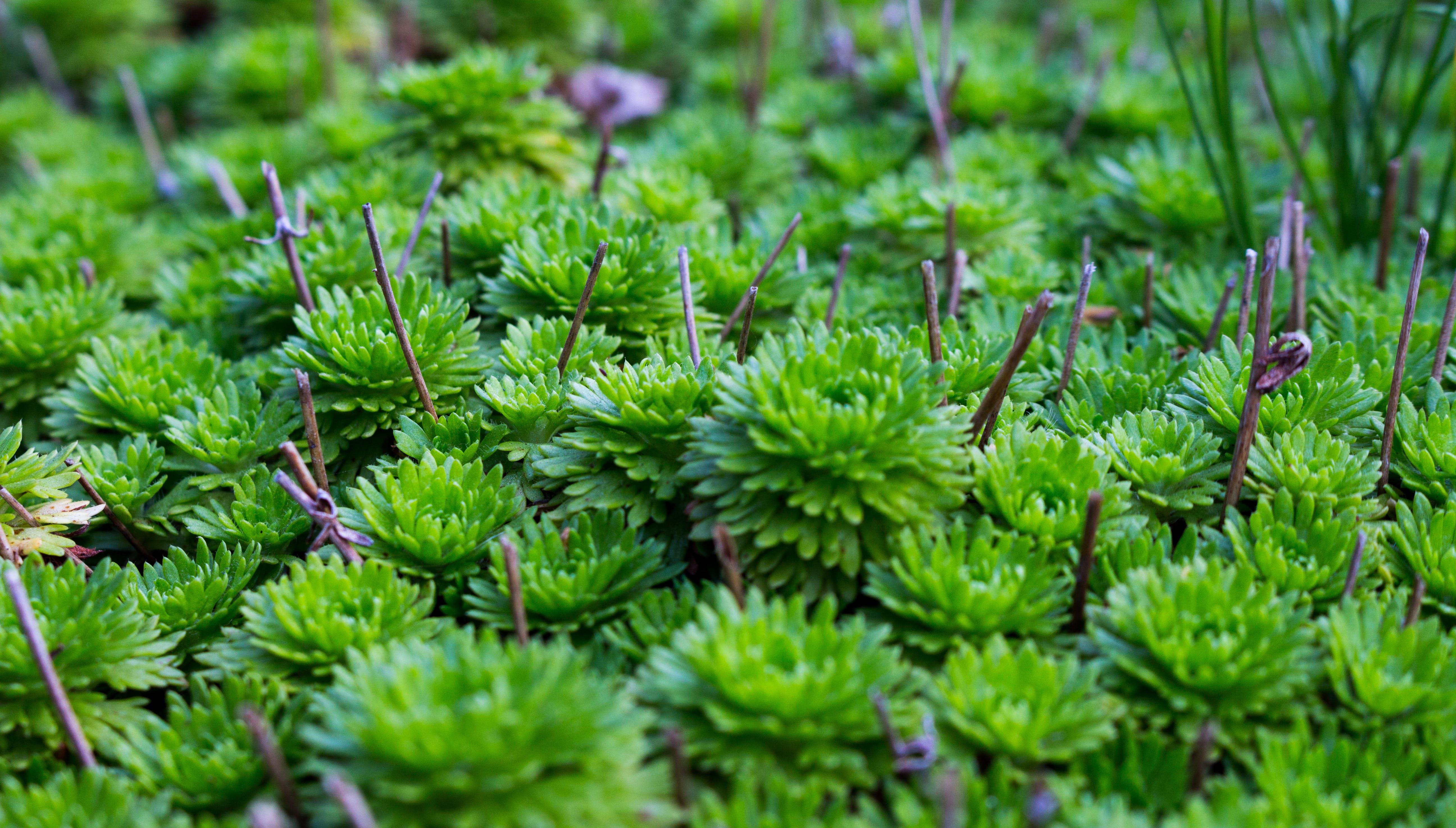 botanical, close-up, environment