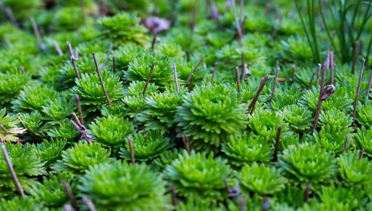 anlegg, botanisk, grønn