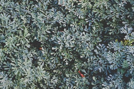Free stock photo of nature, bush, plant, flower