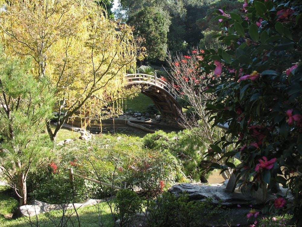 Free stock photo of bridge, garden
