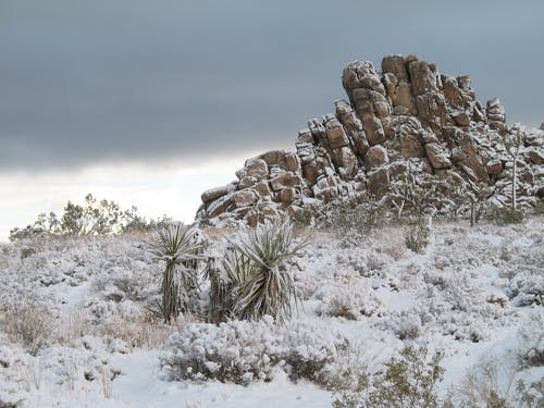 Darmowe zdjęcie z galerii z drzewo jozuego, śnieg