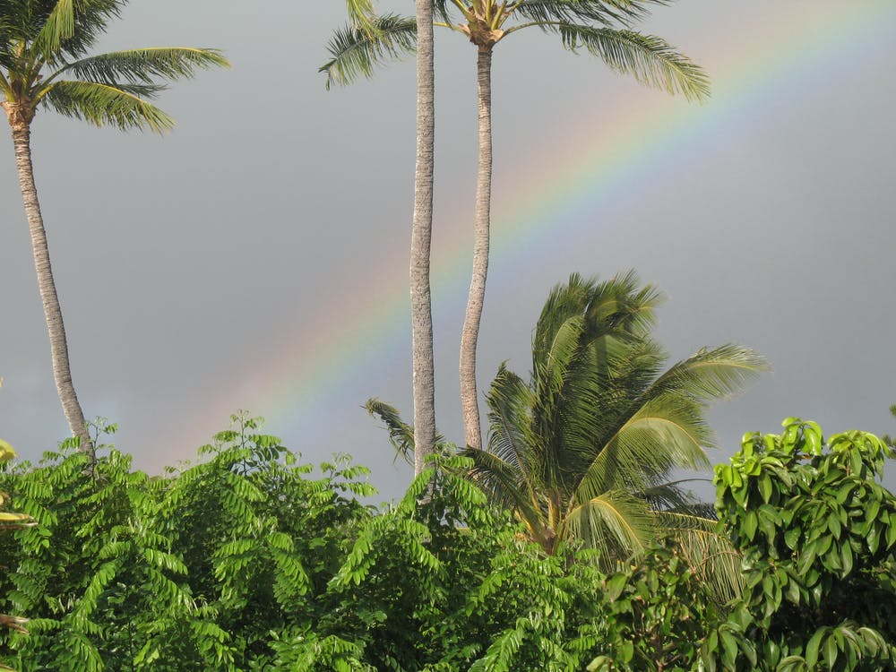 Free stock photo of rainbow, tropical