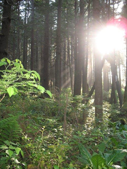 Darmowe zdjęcie z galerii z las, pnw, północny zachód
