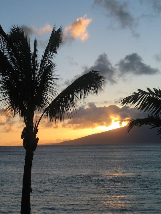 Free stock photo of palms, sunset