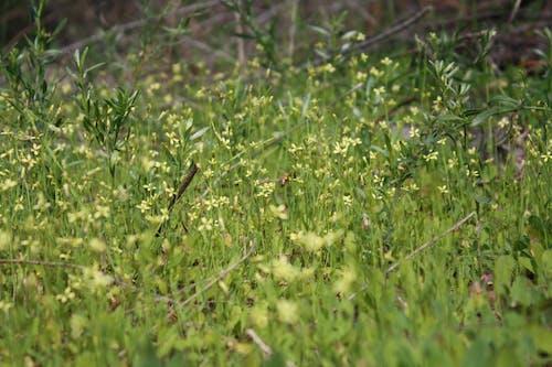 Darmowe zdjęcie z galerii z dzika trawa