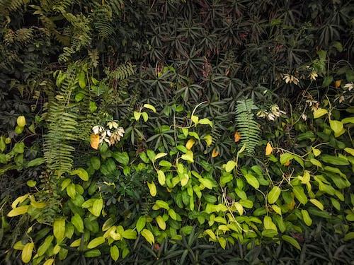 Free stock photo of green, green plants, life, natural