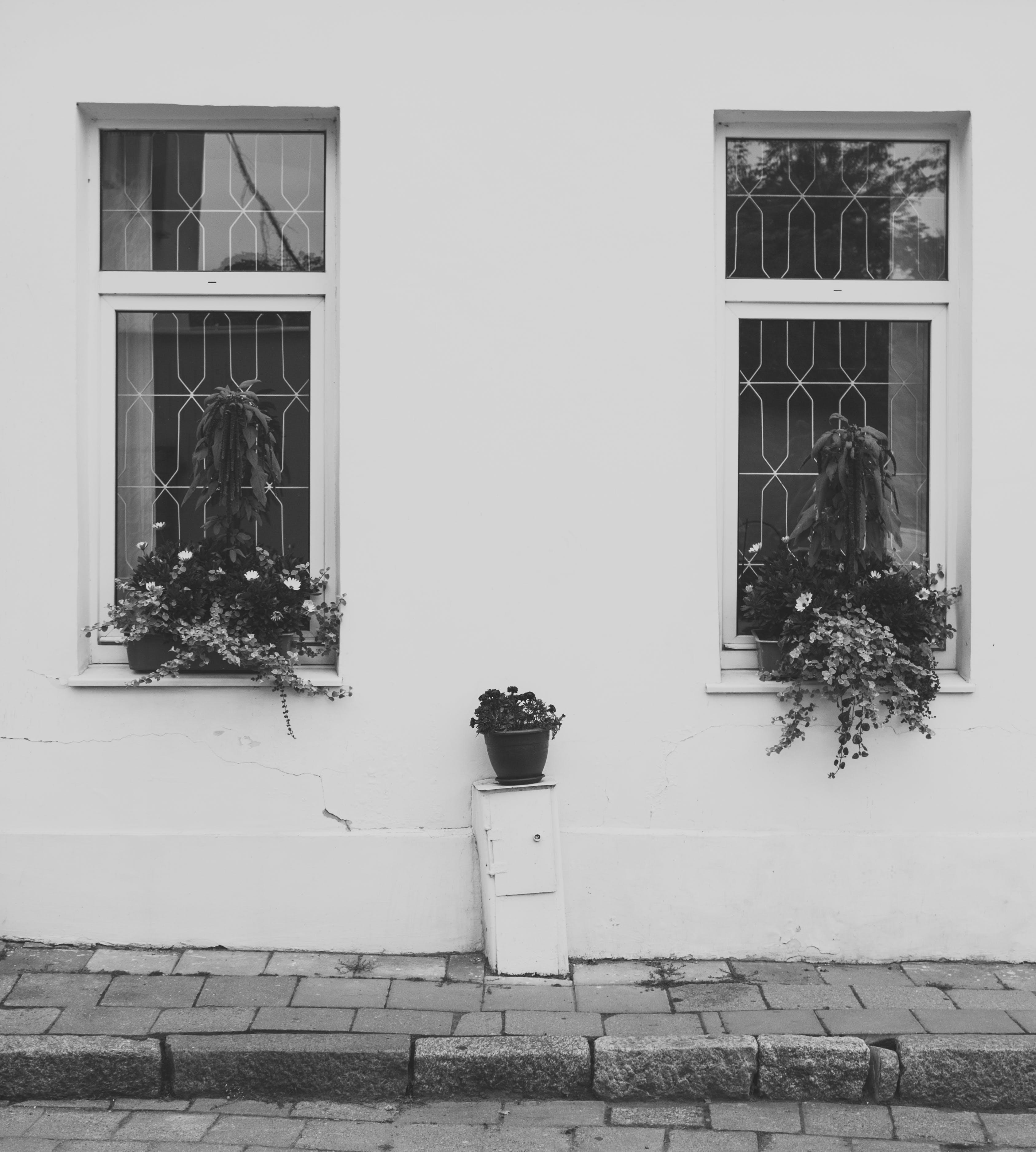 black-and-white, building, flower pot