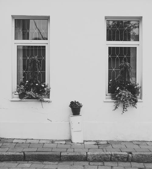 Photos gratuites de bâtiment, centrales, chaussée, fenêtres