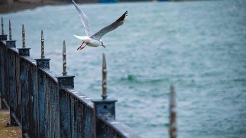 가득한, 물, 손을 흔들다, 울타리의 무료 스톡 사진