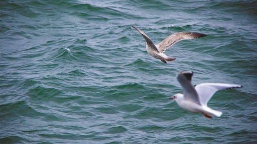 녹색 물, 물, 바다, 새의 무료 스톡 사진