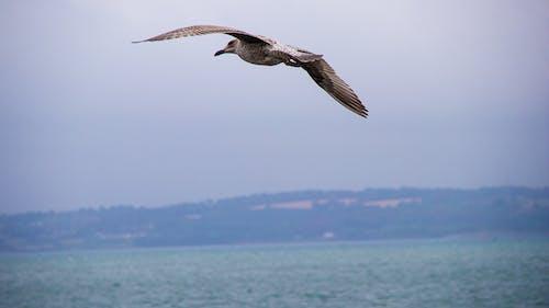 구름, 물, 바다, 새의 무료 스톡 사진