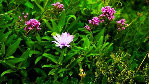 꽃, 녹색, 다채로운, 라일락의 무료 스톡 사진