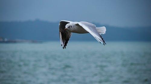 구름, 날으는, 날으는 새, 다채로운의 무료 스톡 사진